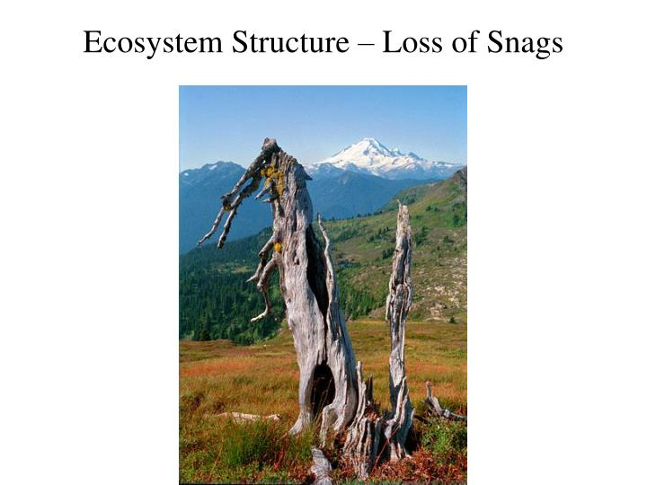 Ecosystem Structure – Loss of Snags