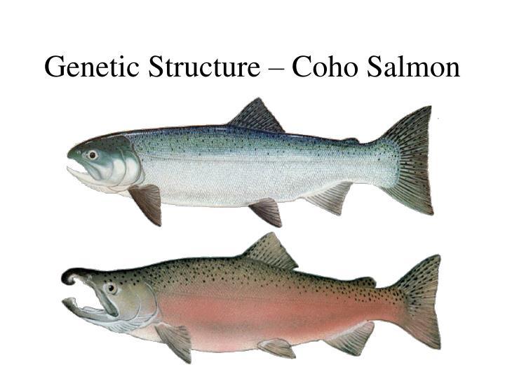 Genetic Structure – Coho Salmon