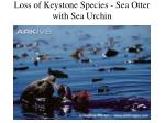 loss of keystone species sea otter with sea urchin