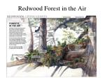 redwood forest in the air