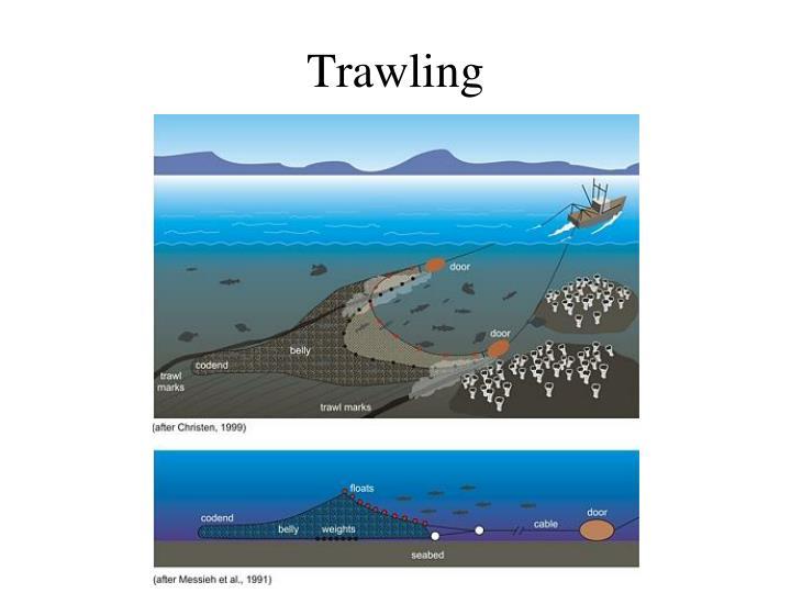 Trawling
