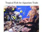 tropical fish for aquarium trade