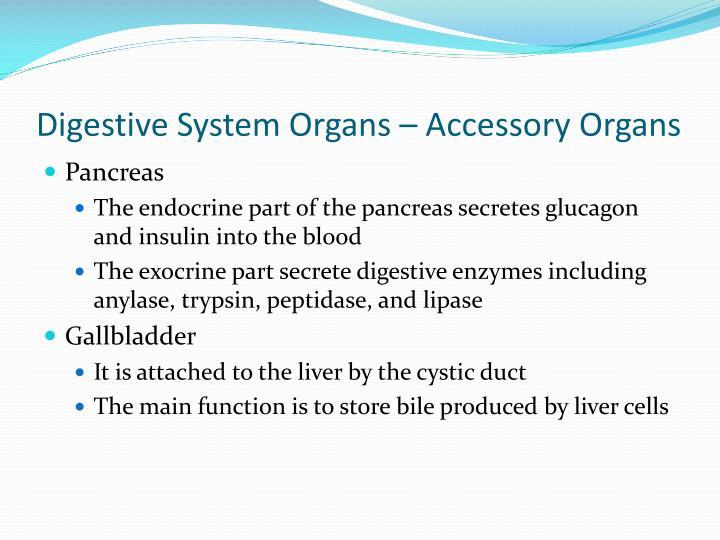 Digestive System Organs – Accessory Organs