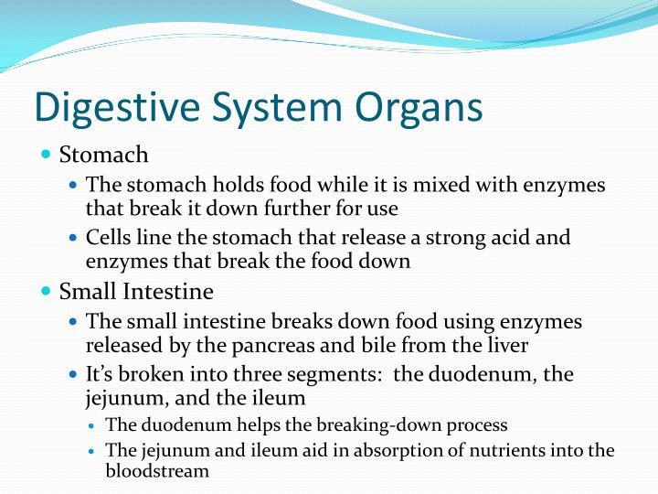 Digestive System Organs