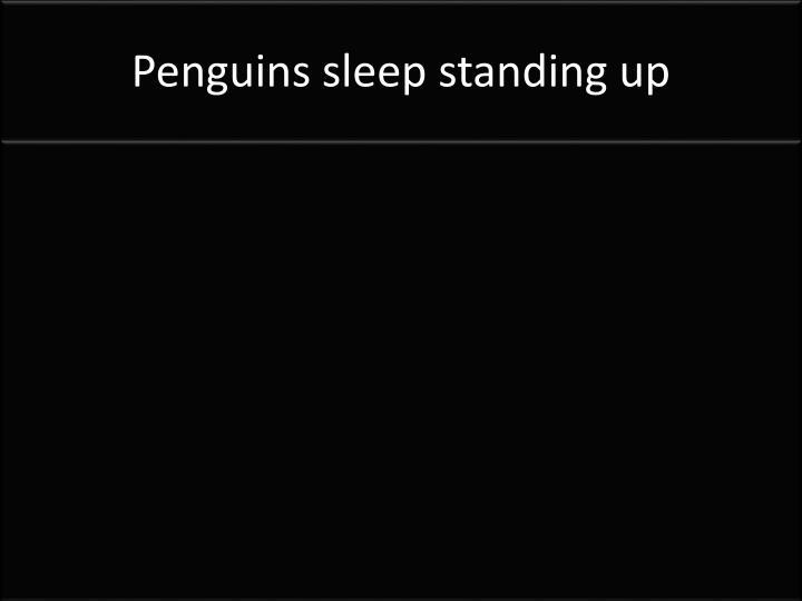 Penguins sleep standing up