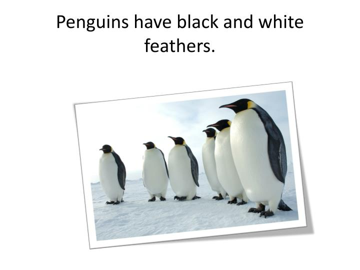 Penguins have black and