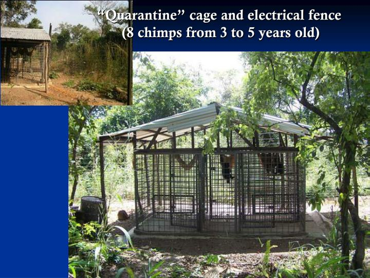 """Quarantine"" cage and electrical fence"
