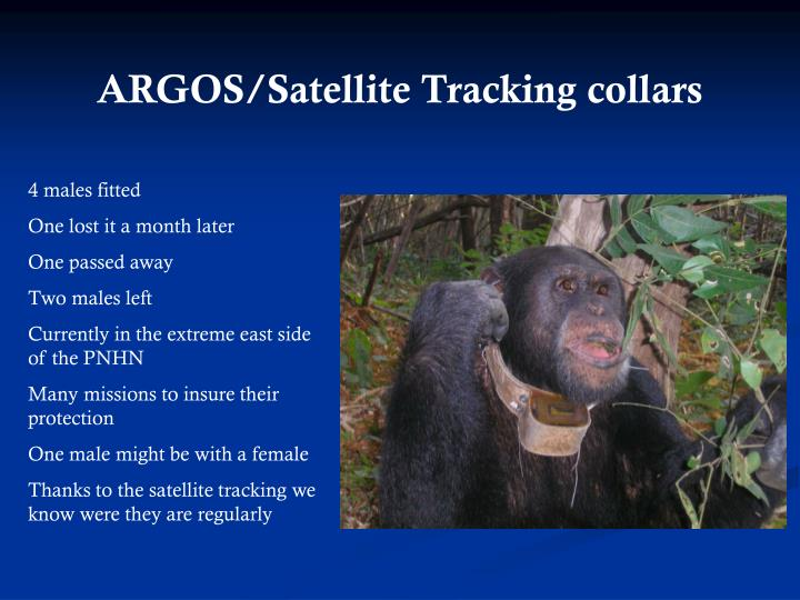 ARGOS/Satellite Tracking collars
