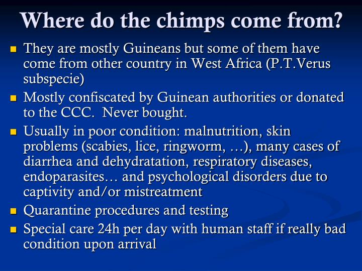 Where do the chimps come from?