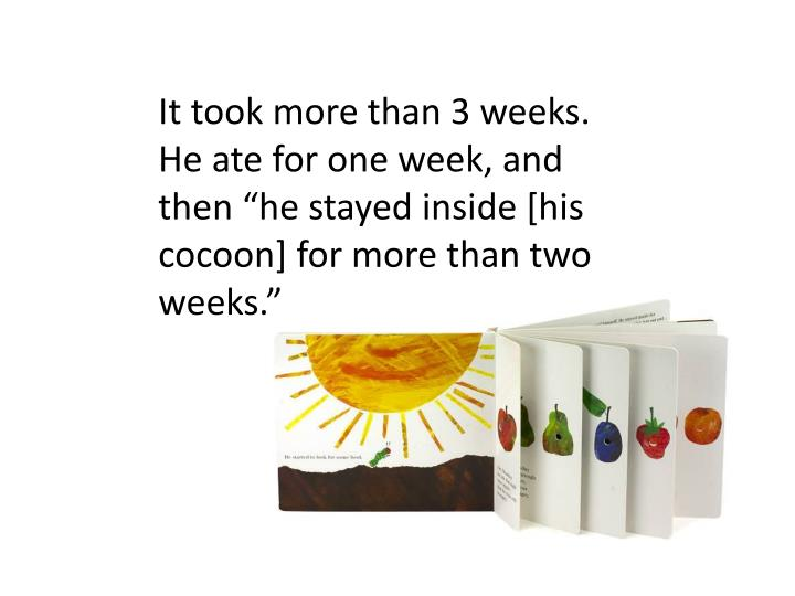 """It took more than 3 weeks. He ate for one week, and then """"he stayed inside [his cocoon] for more than two weeks."""""""