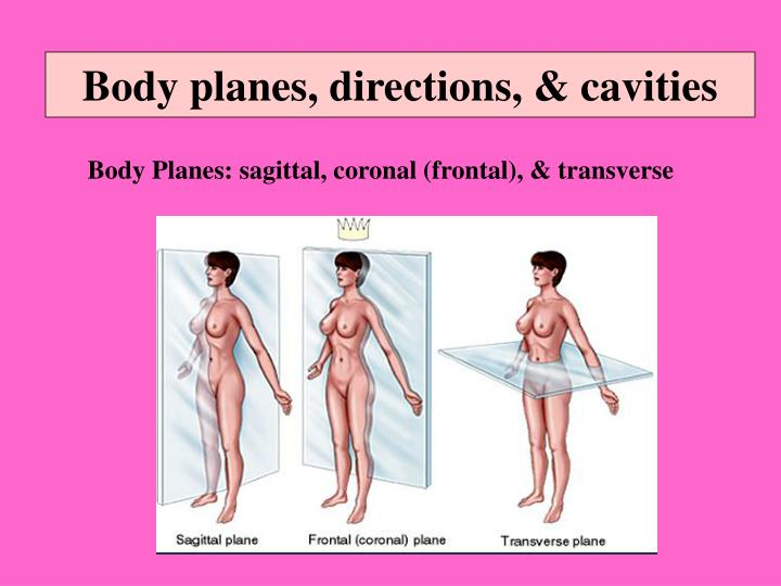 Body planes, directions, & cavities