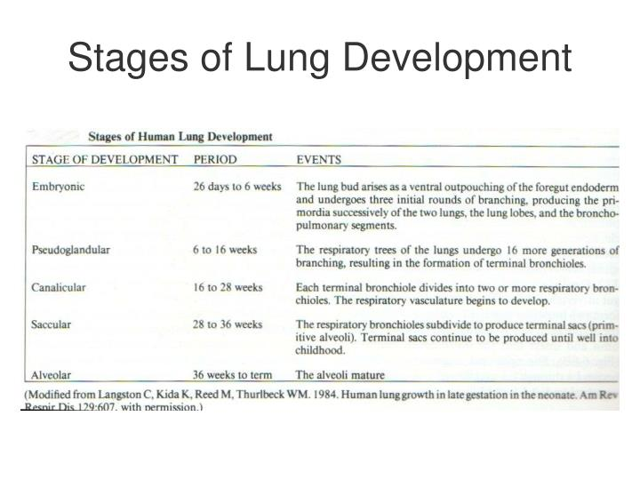 Stages of Lung Development
