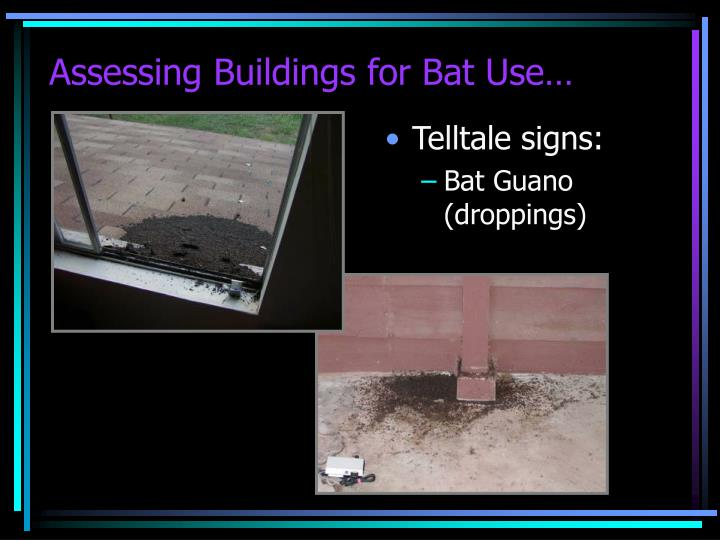 Assessing Buildings for Bat Use…