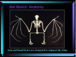 bat basics anatomy