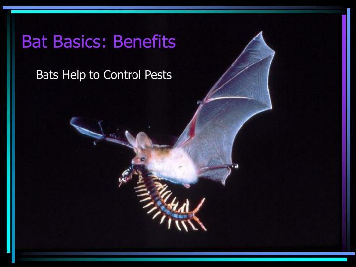 Bat Basics: Benefits