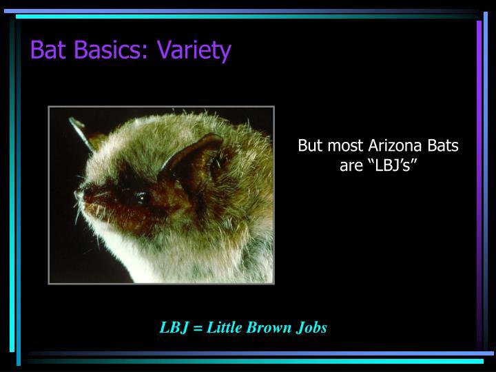 Bat Basics: Variety