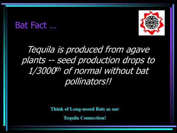 Bat Fact …