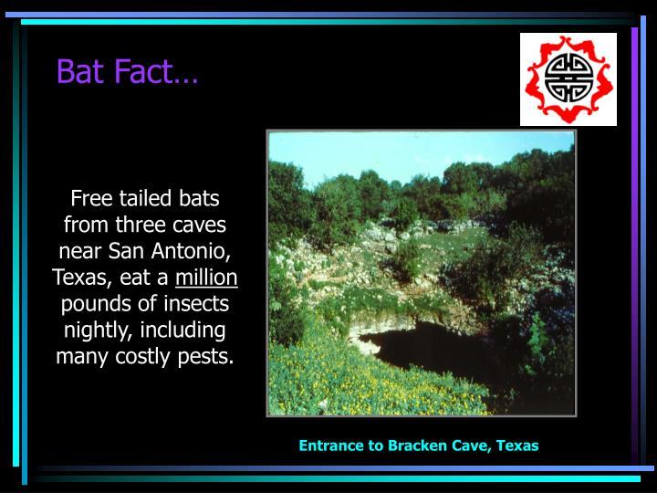 Bat Fact…