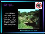 bat fact2