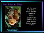 bats roost in trees