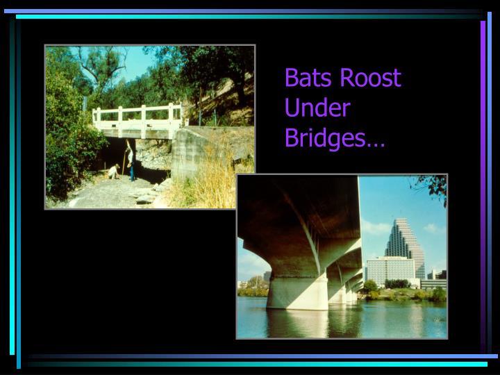 Bats Roost Under
