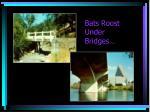 bats roost under bridges