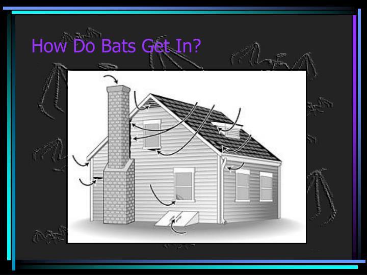 How Do Bats Get In?