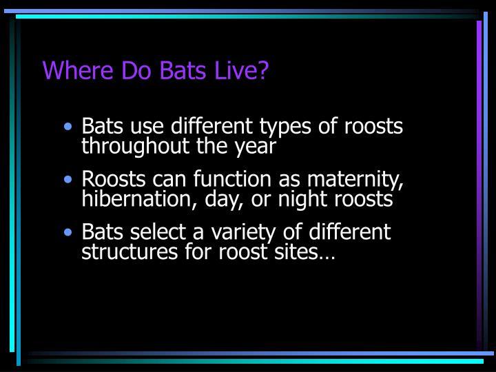 Where Do Bats Live?