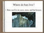 where do bats live
