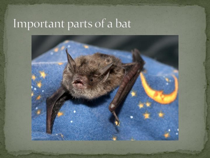 Important parts of a bat