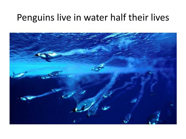 Penguins live in water half their lives