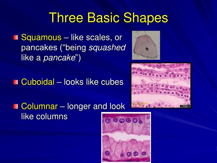 Three Basic Shapes
