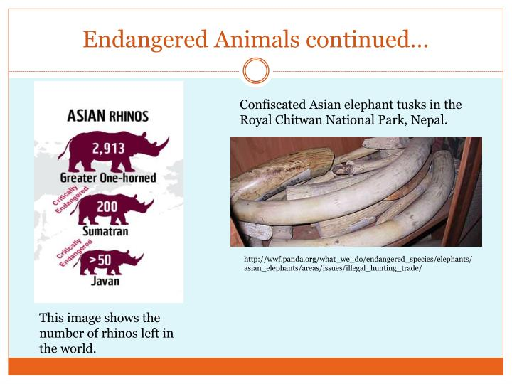 Endangered Animals continued…