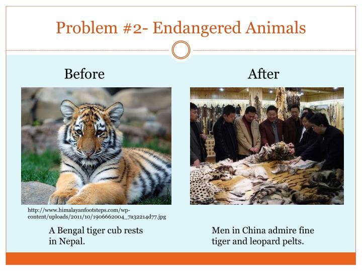 Problem #2- Endangered Animals