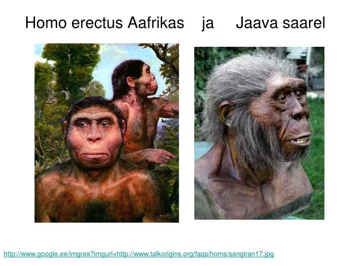 Homo erectus Aafrikas    ja     Jaava saarel