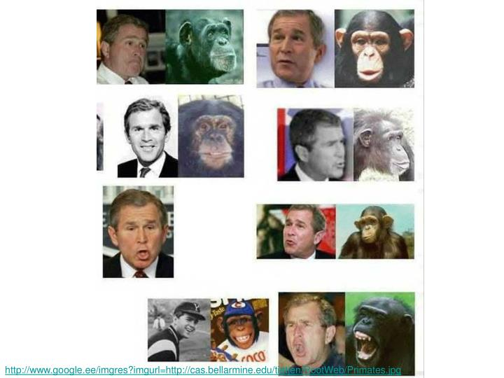 http://www.google.ee/imgres?imgurl=http://cas.bellarmine.edu/tietjen/RootWeb/Primates.jpg