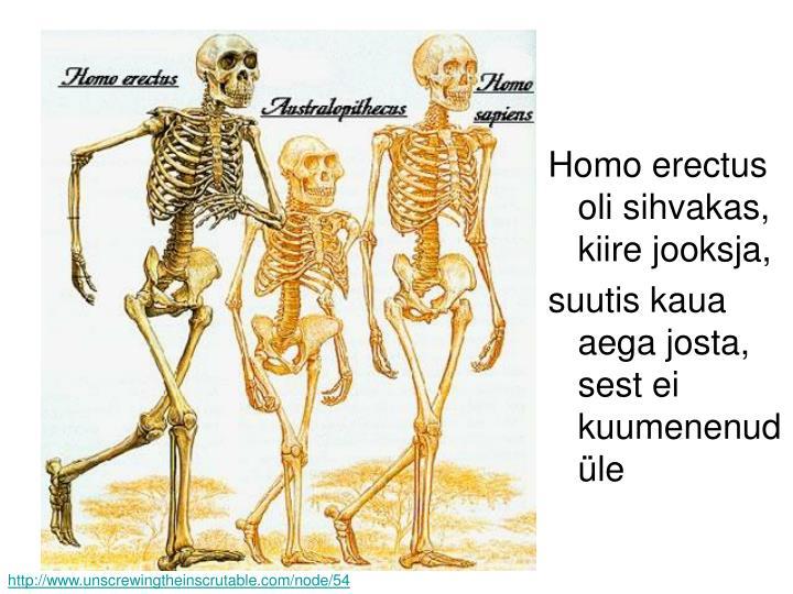 Homo erectus oli sihvakas, kiire jooksja,
