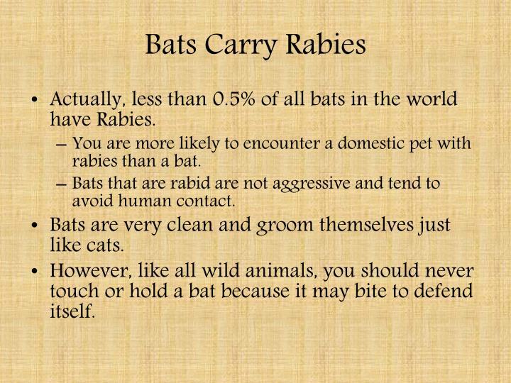 Bats Carry Rabies