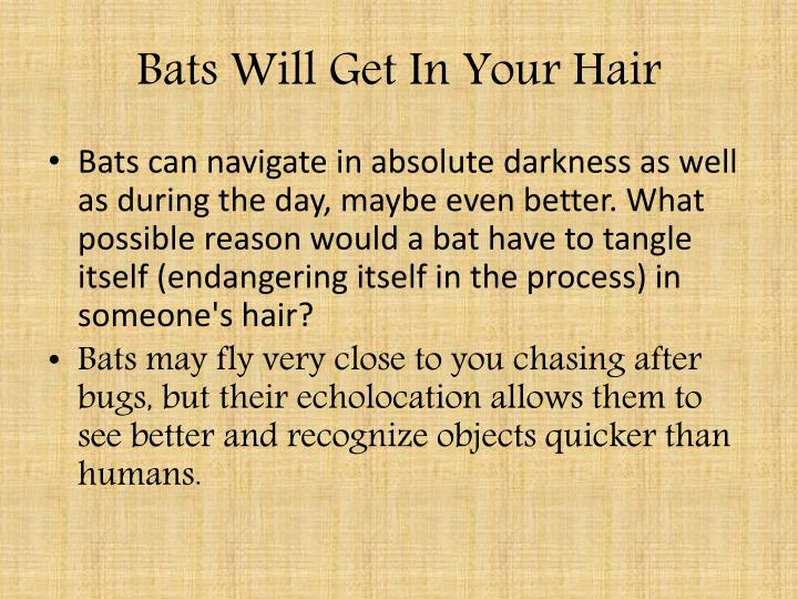 Bats Will Get In Your Hair