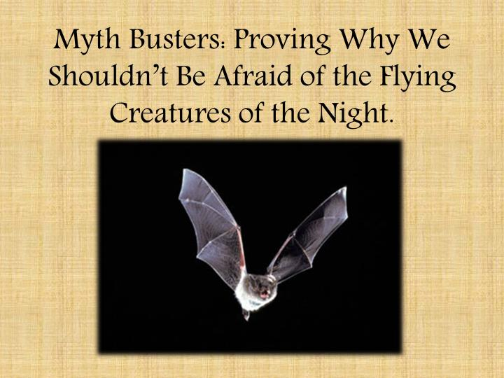 Myth Busters: Proving Why We Shouldn't Be Afraid of the Flying Creatures of the Night.