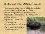 the indiana bat at o bannon woods