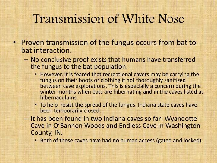 Transmission of White Nose
