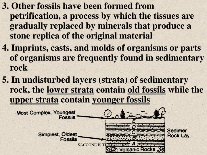 3. Other fossils have been formed from petrification, a process by which the tissues are gradually replaced by minerals that produce a stone replica of the original material