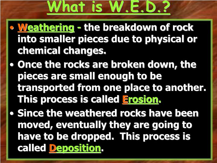 What is W.E.D.?