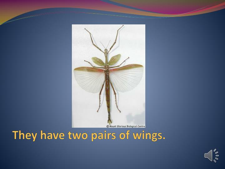 They have two pairs of wings.