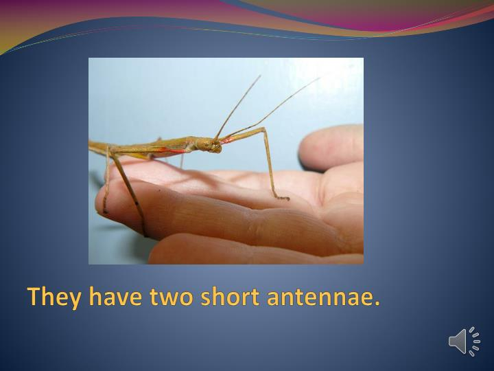 They have two short antennae.