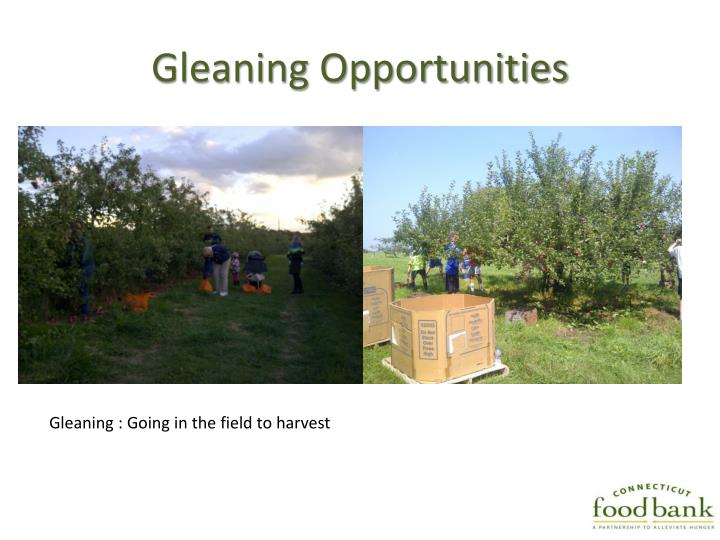 Gleaning Opportunities