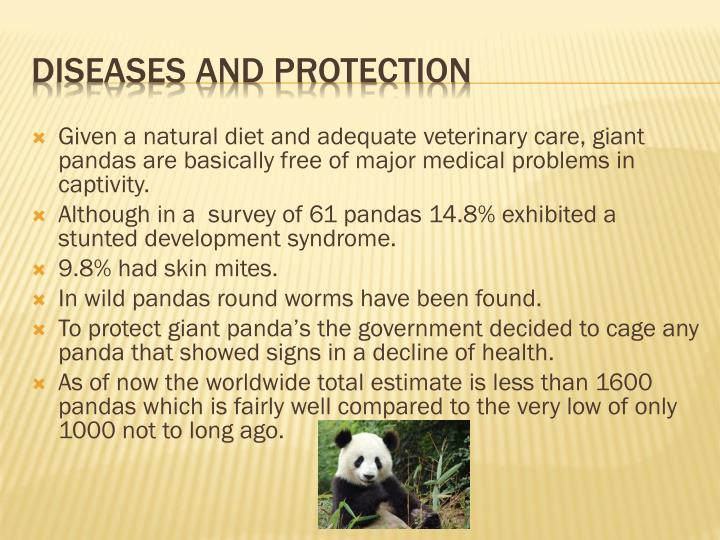 Given a natural diet and adequate veterinary care, giant pandas are basically free of major medical problems in captivity.
