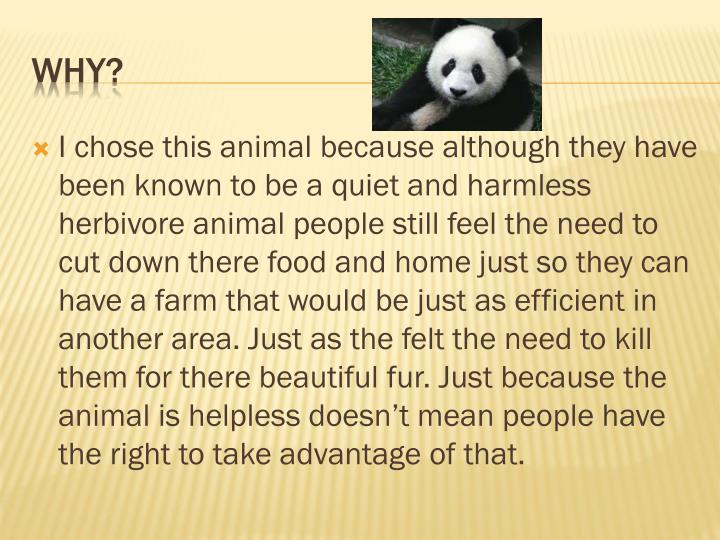 I chose this animal because although they have been known to be a quiet and harmless herbivore anima...