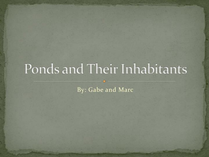 ponds and their inhabitants